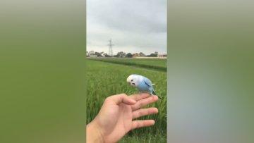 Sahibine geri dönen muhabbet kuşları