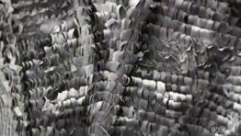 Kelebek kanadının mikroskopla detaylı çekimi