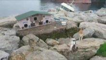 Pendik'te denize nazır kedi evleri