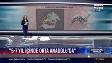 Zika tehlikesi Türkiye'de