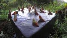 Kuşların havuz partisi