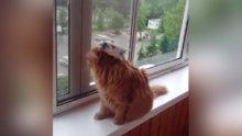Kedinin sabrını zorlayan kuş