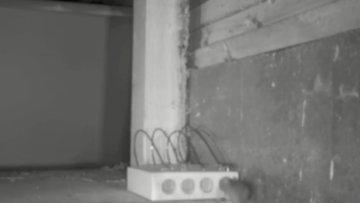 Dünyanın en eski fare tuzaklarından biri