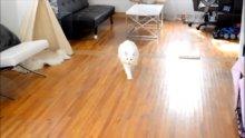 Köpeklere git-getir oyununu öğreten kedi
