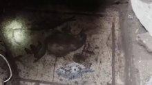 Kaçak kazı alanında mozaik bulundu