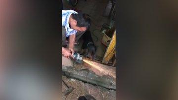 Kıvılcımları ısırmaya çalışan köpek