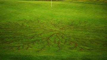 Golf sahasının yıldırım düştükten sonraki hali