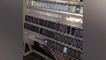 Çin'de kurulan cep telefonu tarlaları