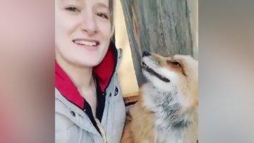 Tilkiyle sevimli dostluk