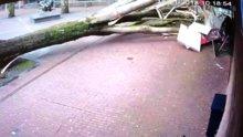 Ağaç neredeyse anne ve bebeğin üstüne devrilecekti