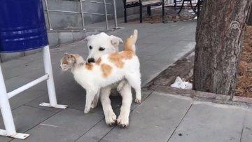 Kedi ile köpeğin şaşırtan dostluğu böyle görüntülendi