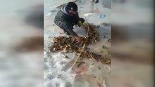 Ağrı'da buz tutan derede balık tutan vatandaşların sevinci
