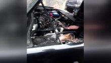 Aracın motoruna sıkışan kedi böyle kurtarıldı