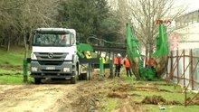 Maçka Parkı'ndan taşınan 176 ağaç Sarıyer'deki tabiat parkına dikildi