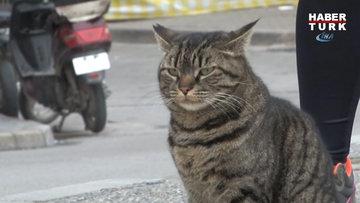 Bu mahallenin kedisi mahalle sakinleri ile 4 yıldır süt almak için sıraya giriyor