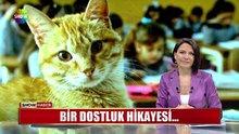 Sevimli kedi tombi okula geri dönüyor