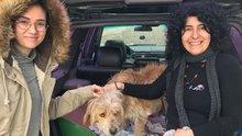 Ölüme terk edilen köpek hayata döndürüldü