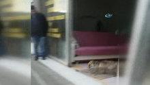Yolunu şaşıran tilki mağazaya girdi