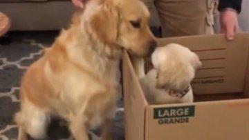 Aileye yeni katılan köpeği görünce mutlu oldu