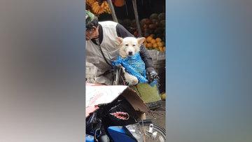 Köpeği yağmurda ıslanmasın diye korumaya çalışan adam