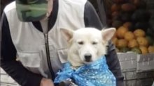 Yağmurdan korunan sevimli köpek