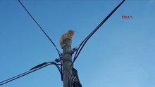 Köpek korkusundan direğe tırmanan kedi