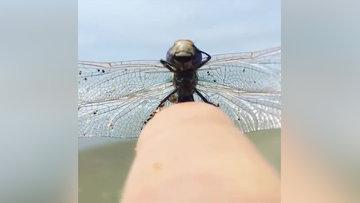 Yusufçuğun yakından çekilmiş muhteşem görüntüsü