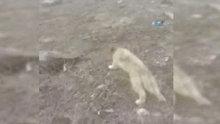 Kafası bidona sıkışan yavru köpek kurtarıldı