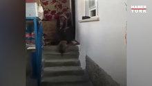 Yavru köpeği Ege şivesiyle karşılayan Hatice Teyze