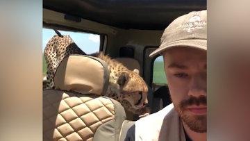 Tanzanyada safariye çıkan adamın zor anları