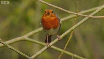Mucizevi hayvanlar: Kızılgerdan kuşu
