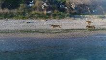 Köpeklerin drone merakı renkli görüntüler oluşturdu