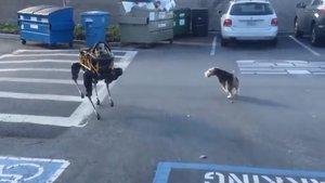 Robot köpek gerçek köpekle karşılaşırsa...