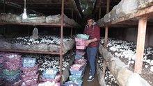 Mantar üreterek köyünde tersine göçü teşvik etti