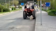 Traktörün arkasına iple bağladığı köpeği koşturdu