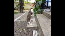 Yavruyken elektrik çarpması sonucu ön ayaklarını kaybeden kedi Able