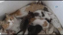Kedinin merhameti görenleri hayrete düşürdü
