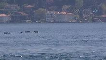 İstanbul'da Boğazı'nda yunus balıklarından görsel şölen