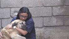 Ölmek üzere bulduğu iki sokak köpeğini 6 ayda hayata döndürdü
