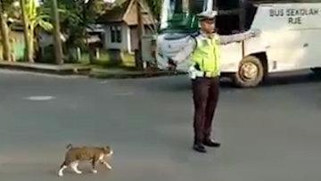 Kedinin karşıdan karşıya geçebilmesi için yol açan trafik polisi