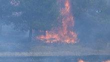 Denizli'de anız yangını ormana sıçradı