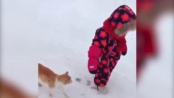 Kedinizi sevmezseniz o kendini sevdirmeyi bilir