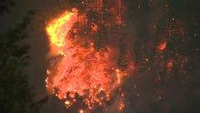 Orman yangını çıkaran çocuğa 36 milyon dolar ceza!