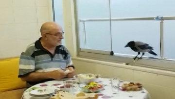 Akıllı karga iftar saatinde sofrada