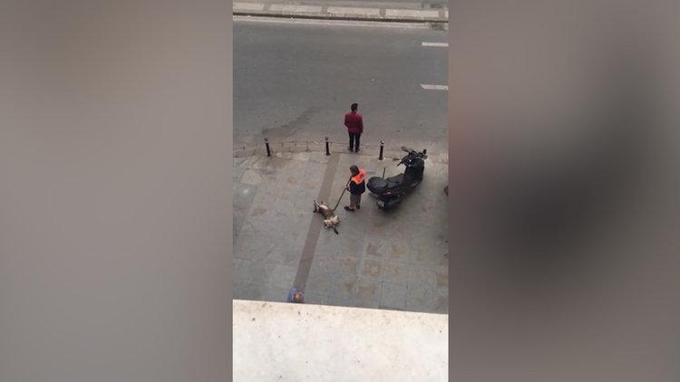 Sokak köpeği ve temizlik elemanının sevimli halleri