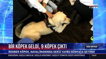 Rehber köpek havalimanında doğum yaptı