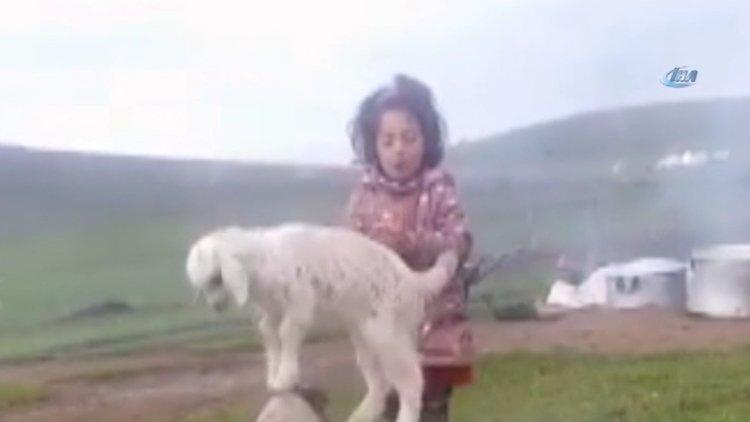 Minik kız şarkı söyledi, kuzusu dans etti