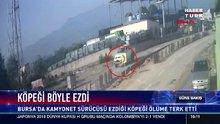Kamyonet sürücüsü ezdiği köpeği ölüme terk etti