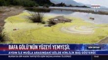Bafa Gölü'nün yüzeyi yemyeşil