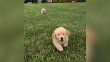 Sevimli köpeklerin mutluluğu